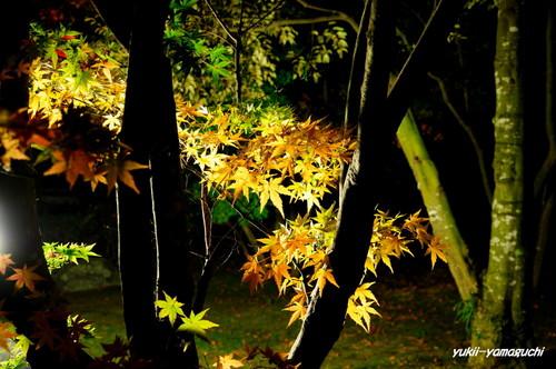 長府庭園灯りの祭典14.jpg