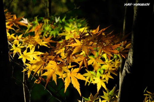 長府庭園灯りの祭典15.jpg