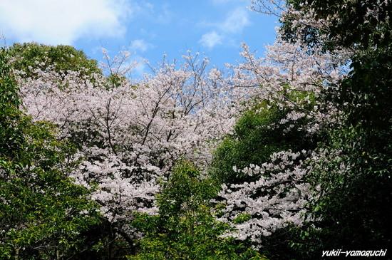 天神山公園03.jpg