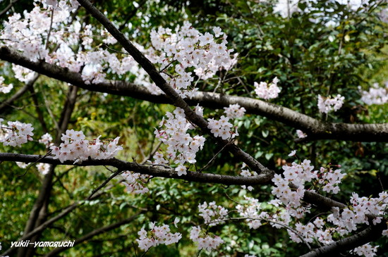 天神山公園04.jpg