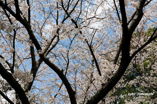 天神山公園05.jpg