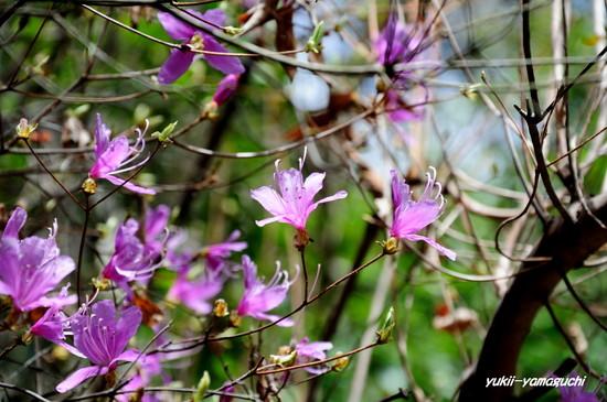 天神山公園09.jpg