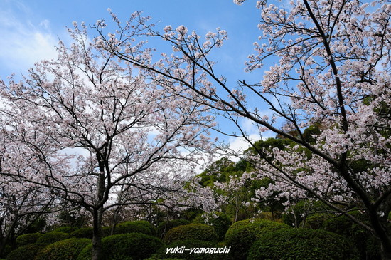 天神山公園10.jpg