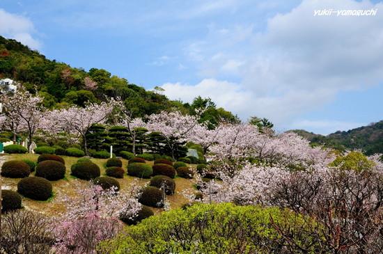 天神山公園11.jpg