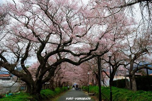 徳佐八幡宮05.jpg