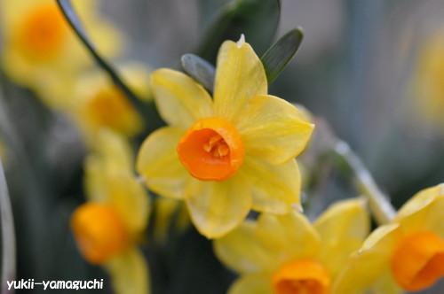 縄地その辺の花1.jpg
