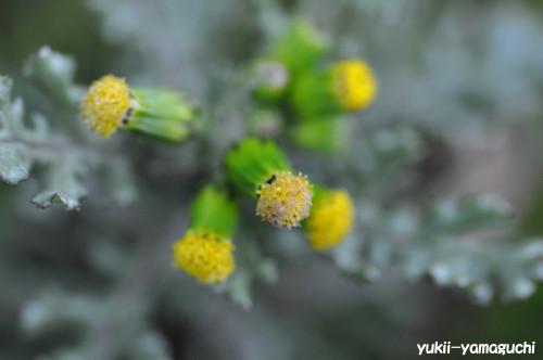 縄地その辺の花2.jpg