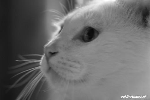 猫07.jpg