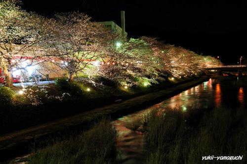 美祢厚狭川ライトアップ06.jpg