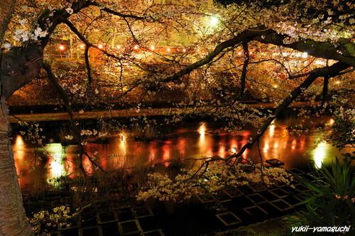 美祢厚狭川ライトアップ11.jpg
