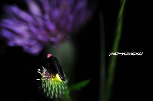 豊田町ほたるⅢ 026.jpg