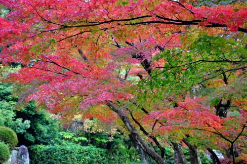 毛利庭園007.jpg