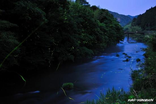 木屋川ほたる01.jpg