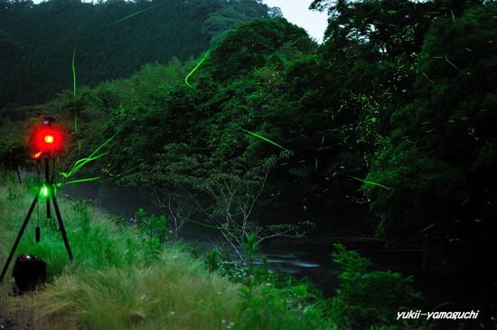 木屋川ほたる03.jpg