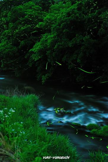 木屋川ほたる07.jpg