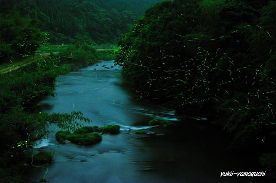 木屋川ほたる09.jpg