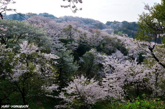 竜王山04.jpg
