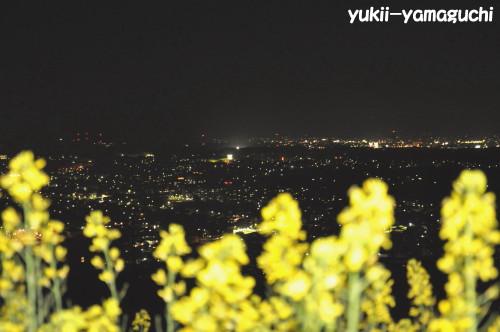 竜王山提灯05.jpg