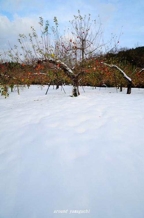 りんご園00.jpg