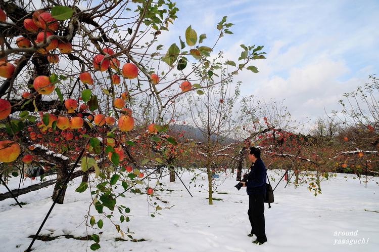 りんご園02.jpg