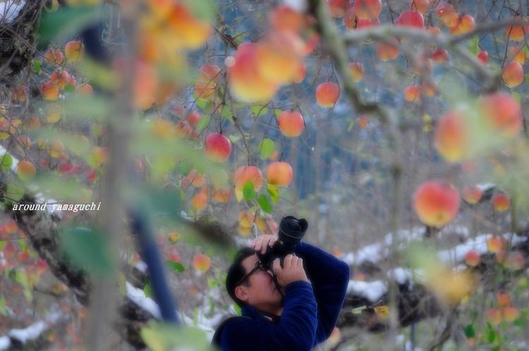 りんご園04.jpg