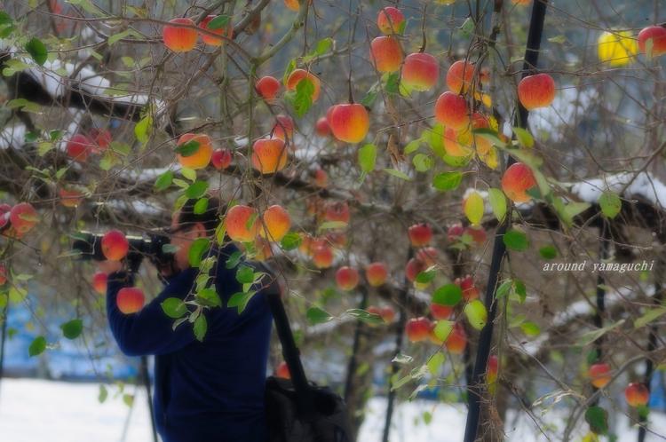 りんご園05.jpg