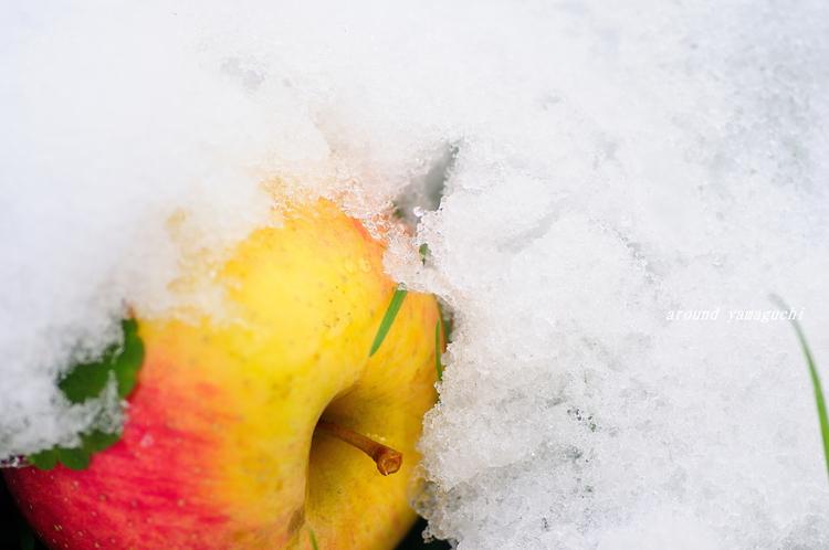 りんご園06.jpg