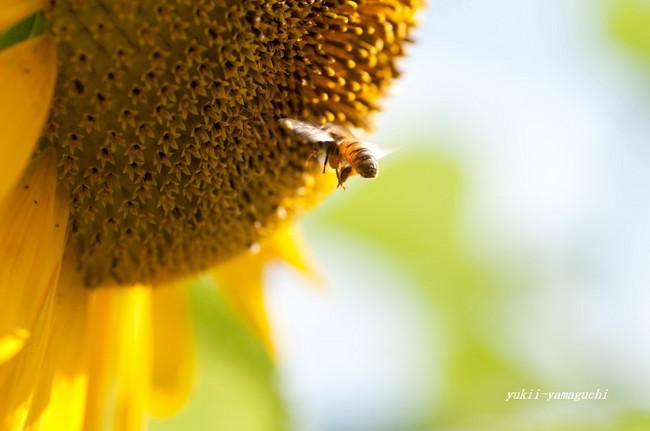 ハチ02.jpg