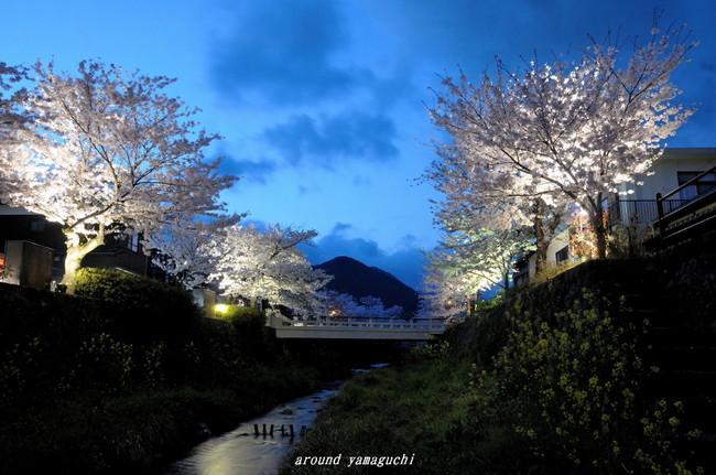 一の坂川夜桜02.jpg