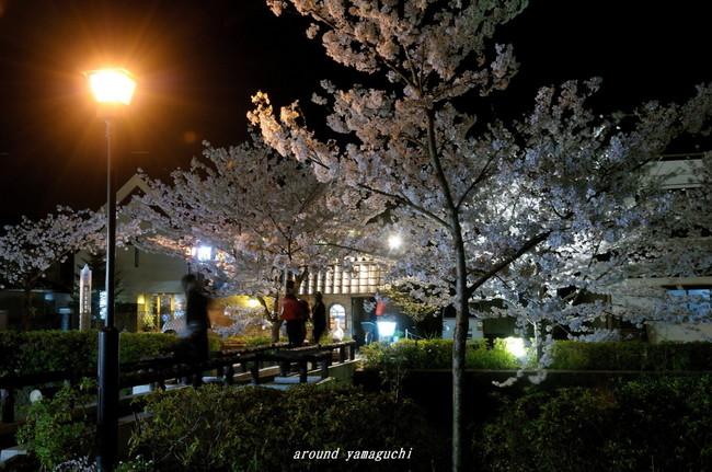 一の坂川夜桜05.jpg
