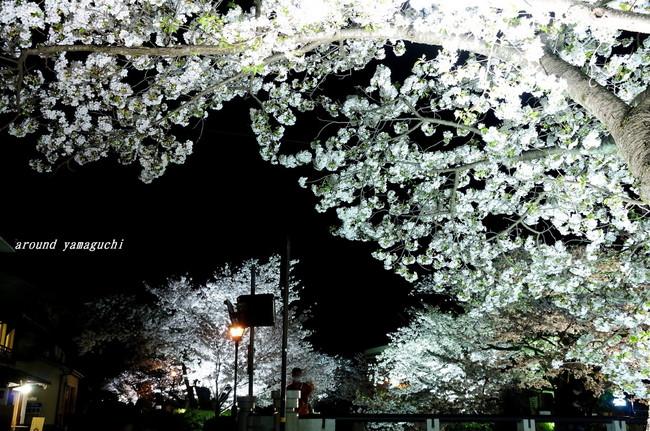 一の坂川夜桜07.jpg