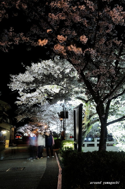 一の坂川夜桜09.jpg