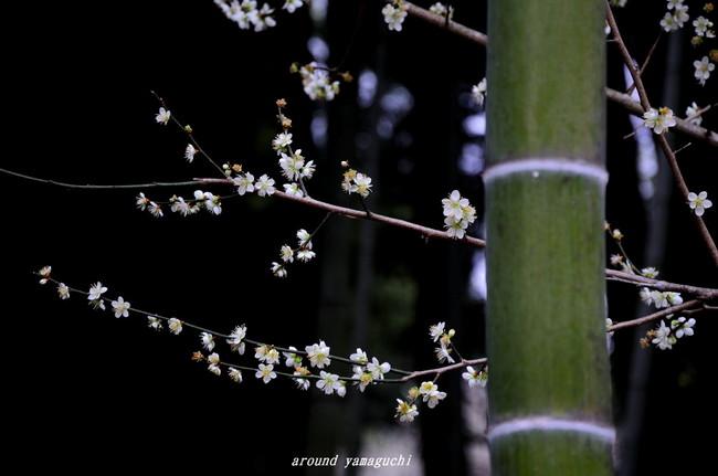 三岳梅林公園03.jpg