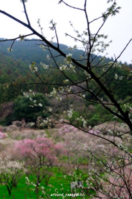 三岳梅林公園05.jpg