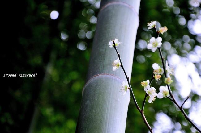 三岳梅林公園06.jpg