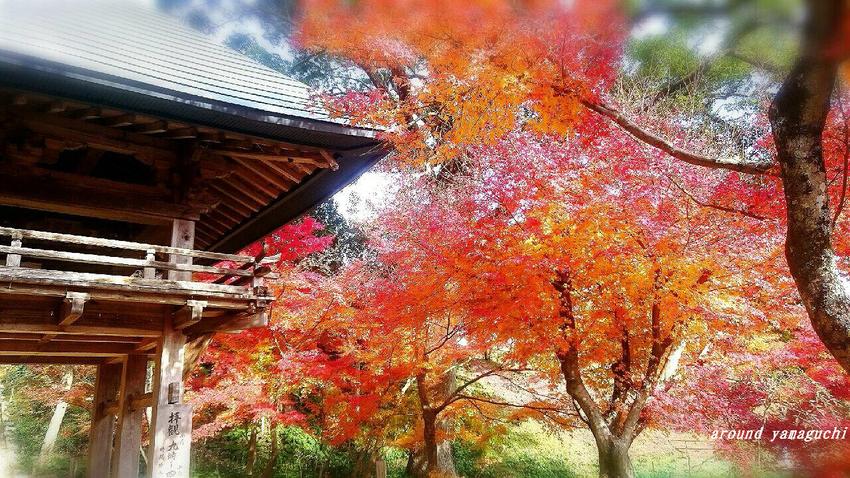 両足寺1208-09.jpg