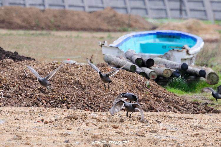 何鳥?02.jpg