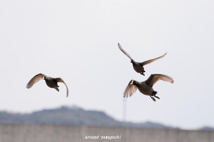 何鳥?04.jpg