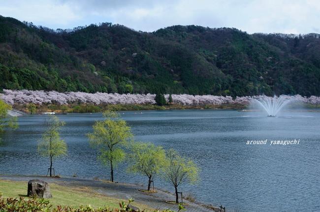 八千代湖09.jpg