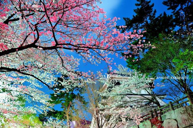 勝山公園04.jpg