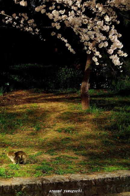 勝山公園08.jpg