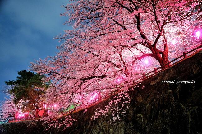 勝山公園19.jpg