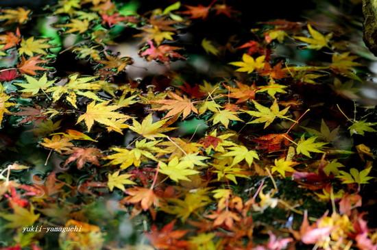 南原寺2010-10.jpg