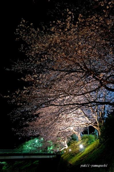 厚狭川02.jpg