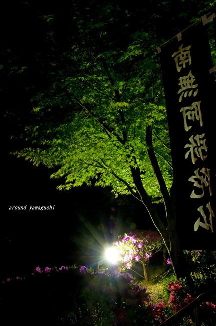 吉祥寺新緑14.jpg