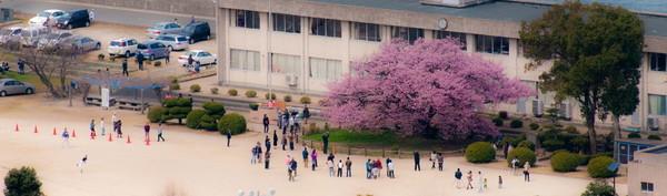 向島寒桜11.jpg
