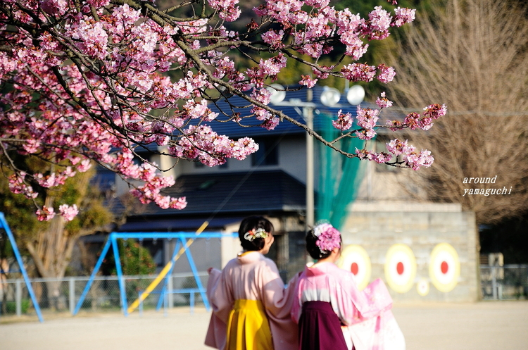 向島蓬莱桜05.jpg