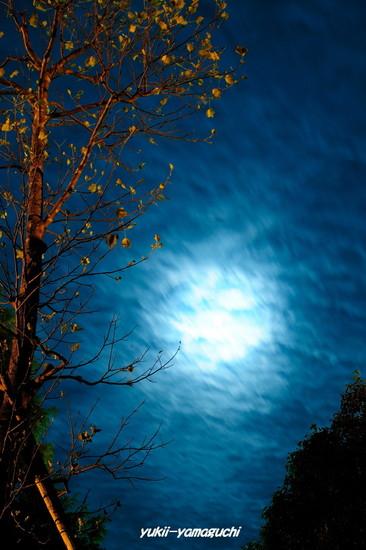 夜の維新公園02.jpg