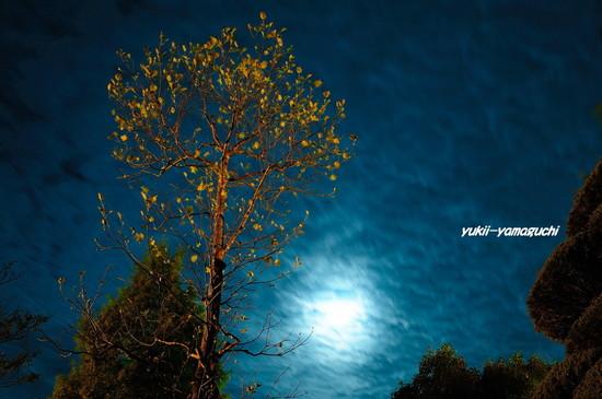 夜の維新公園09.jpg