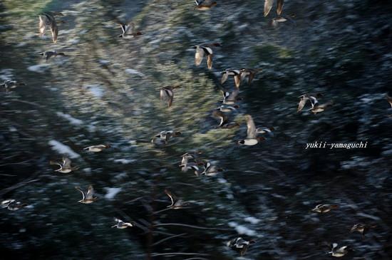 大原湖17.jpg